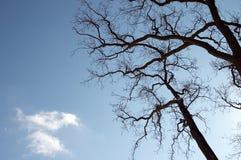 Bomen versus hemel stock fotografie