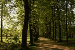 Bomen in Villa Varda Park Royalty-vrije Stock Afbeeldingen