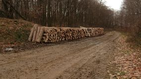 Bomen voor brand stock footage