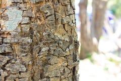 Bomen voor ontwerp en achtergrond Stock Fotografie
