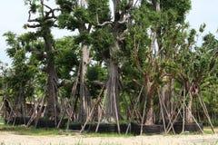 Bomen voor verkoop Royalty-vrije Stock Fotografie