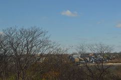 Bomen in voorgrond met huizen zichtbaar op achtergrond met duidelijke skys stock afbeelding