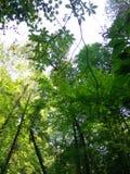 Bomen vooruit royalty-vrije stock afbeelding