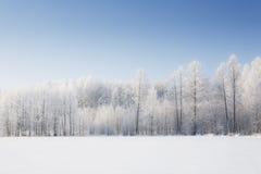 Bomen in vorst Stock Afbeeldingen