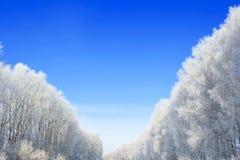 Bomen in vorstclose-up op achtergrond van blauwe hemel Kerstmis Stock Foto's
