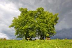 Bomen vóór een onweer Stock Fotografie