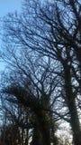 Bomen vroege avond in Ierland Royalty-vrije Stock Afbeeldingen