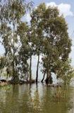 Bomen in water Stock Fotografie