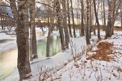 Bomen in Water worden bevroren dat Stock Afbeeldingen