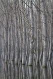Bomen in water worden weerspiegeld dat royalty-vrije stock foto