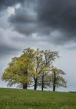 Bomen in Weer Royalty-vrije Stock Afbeeldingen