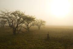 Bomen in Weide met Zon Stock Afbeelding