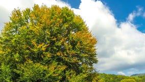 Bomen, weiden en heuvels in overweldigende heldere de herfstkleuren stock videobeelden