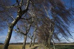 Bomen in wind Stock Afbeelding