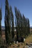 Bomen in wind worden gebogen die Royalty-vrije Stock Afbeelding