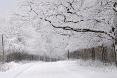 Bomen in wintertijd Royalty-vrije Stock Afbeeldingen