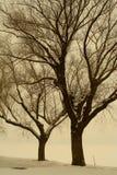 Bomen in witer Stock Afbeeldingen