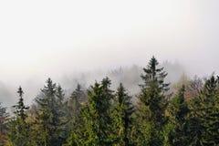 Bomen in wolken Royalty-vrije Stock Foto's