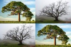 Bomen in zon en mist Stock Afbeelding