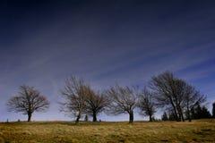 Bomen zonder bladeren Stock Foto's