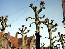 Bomen zonder bladeren Stock Afbeelding