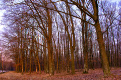 Bomen zonder bladeren Stock Afbeeldingen