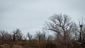 Bomen zonder bladeren tegen een bewolkte hemel stock foto