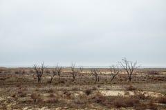 Bomen zonder bladeren tegen een bewolkte hemel royalty-vrije stock foto's