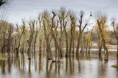 Bomenbezinning over water. Royalty-vrije Stock Afbeeldingen