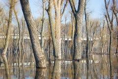 Bomenbezinning over water. Stock Foto's