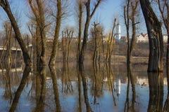 Bomenbezinning over water. Stock Afbeeldingen