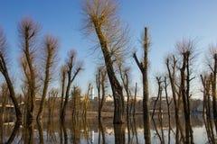 Bomenbezinning over water. Royalty-vrije Stock Foto