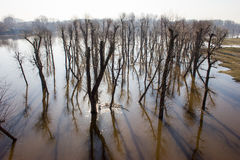 Bomenbezinning over water. Royalty-vrije Stock Afbeelding