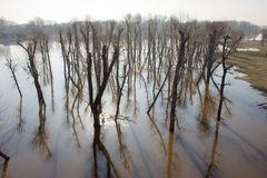 Bomenbezinning over water. Royalty-vrije Stock Foto's
