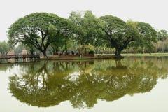 Bomenbezinning in water Stock Fotografie