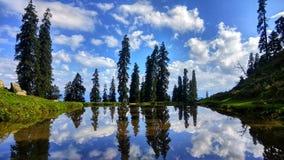 Bomenbezinning in water met het mooie omringen van hemel royalty-vrije stock foto
