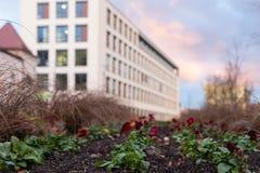 bomenbloemen en gebouwen rond een stadspark in november bij Au stock afbeeldingen