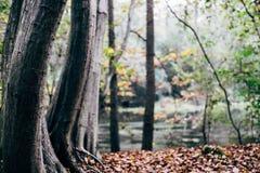 Bomenboomstammen in het bos Royalty-vrije Stock Afbeeldingen