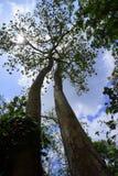 Bomenbroers Stock Afbeeldingen