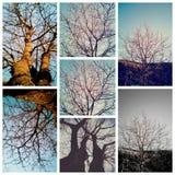 Bomencolage in de herfst Stock Afbeelding