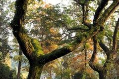 bomendekking met mos en bladeren getoond het begin van de herfst royalty-vrije stock foto's