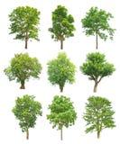 Bomeninzameling op witte achtergrond wordt geïsoleerd die Stock Afbeelding