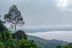 Bomenlandschap op de berg De achtergrond van het onduidelijke beeld Royalty-vrije Stock Afbeeldingen