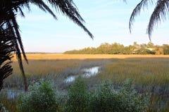 Bomenlijn de banken van het Lage moeras van het Land buiten Beaufort, Zuid-Carolina stock afbeeldingen