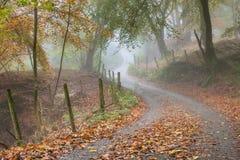 Bomenlijn een bladsteeg in een gemengd bos in de Herfstmist Royalty-vrije Stock Afbeeldingen