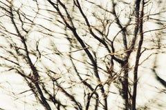 Bomensamenvatting Stock Foto