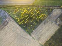 Bomenschot van hierboven met een hommel tijdens Daling, de Herfstkleuren Stock Fotografie