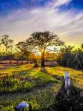 Bomensilhouet bij de zonsondergang of de zonsopgang stock afbeeldingen