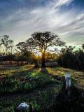 Bomensilhouet bij de zonsondergang of de zonsopgang stock foto