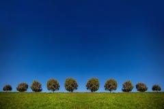 Bomenweide Stock Afbeeldingen